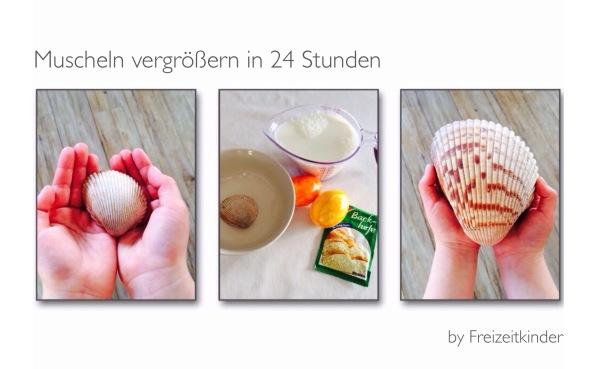 Große Muscheln DIY